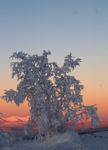 Tree at Gobbler's Knob